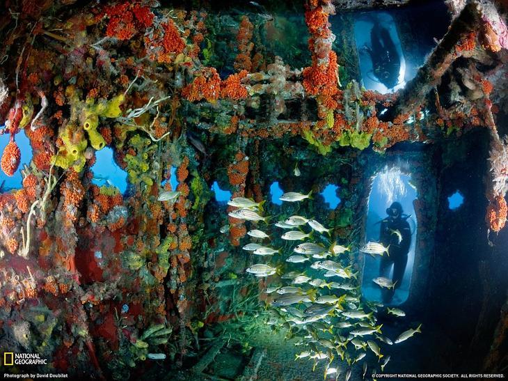 Искусственный риф, Ки-Ларго