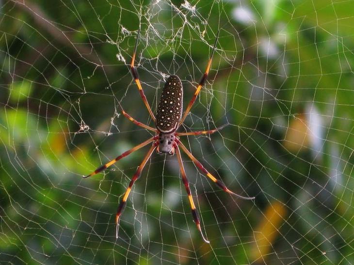 Как избавиться от пауков в теплице?