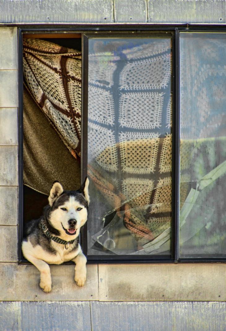 Фотографии собак - 14