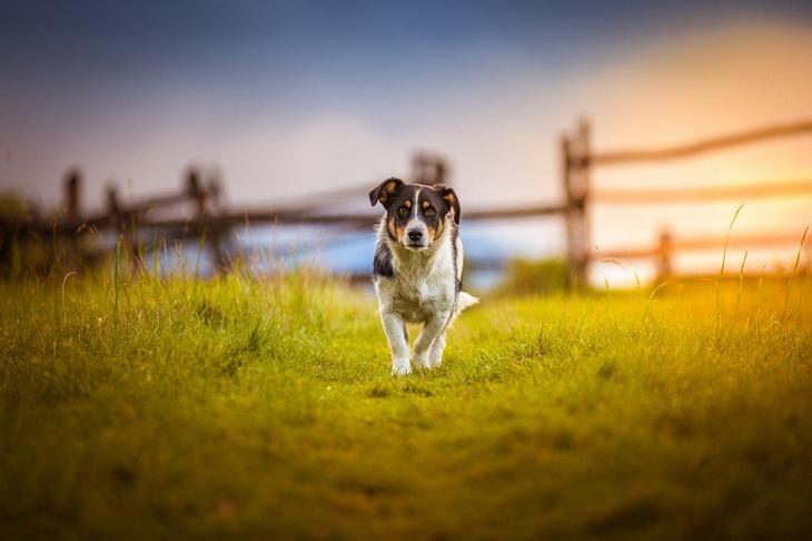 Фотографии собак - 13