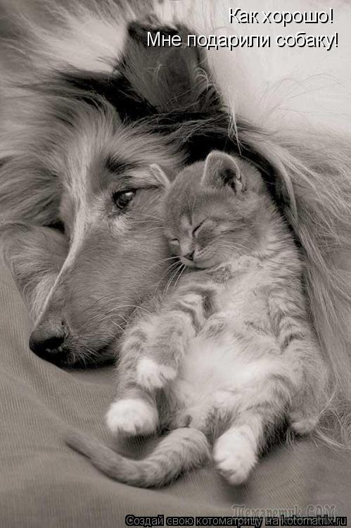 Без кошек жить нельзя на свете, нет ...