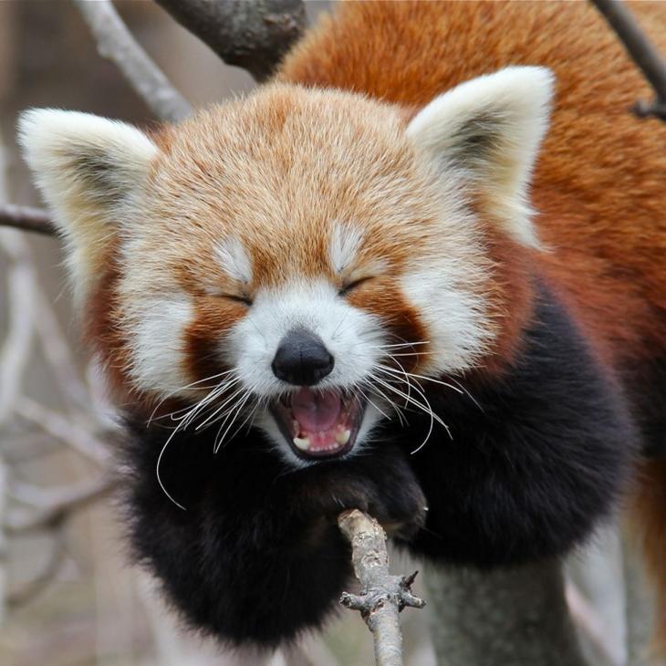 смеющиеся животные, собака улыбака, животные улыбаются
