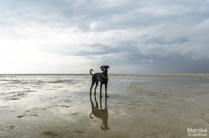 Фотографии собак - 20