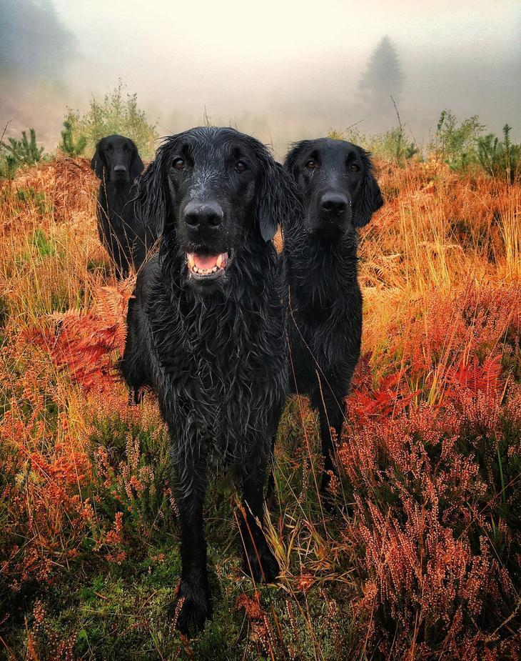 Победители фотоконкурса Dog Photographer of the Year 2018 9