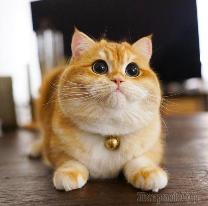 20 смешных и милых фото животных, которые заставят улыбнуться и отвлечься от новостей
