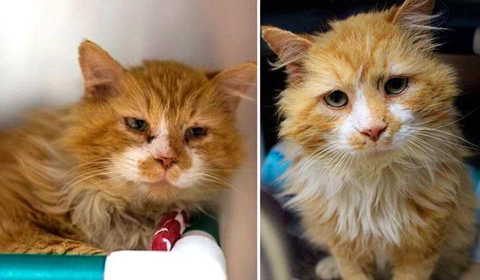 Двойное предательство: кот прошел 20 км до родного дома, чтобы хозяева его усыпили!