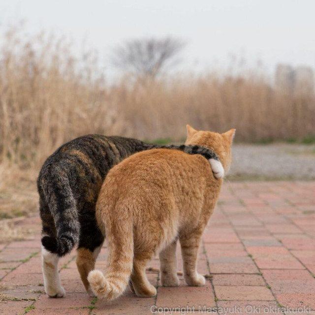 Японские уличные кошки