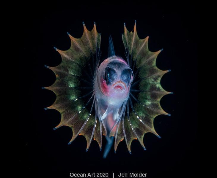 Конкурс подводной фотографии Ocean Art 2020
