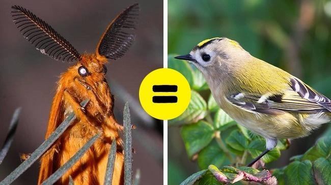 15 существ, которым эволюция подарила такие способности, о каких человек может только мечтать