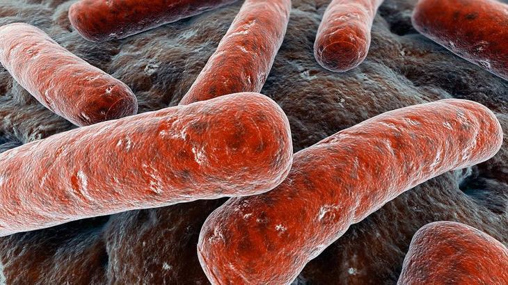 От бактерий - царства рушились. 10 самых опасных из них с фотографиями. - фото 12