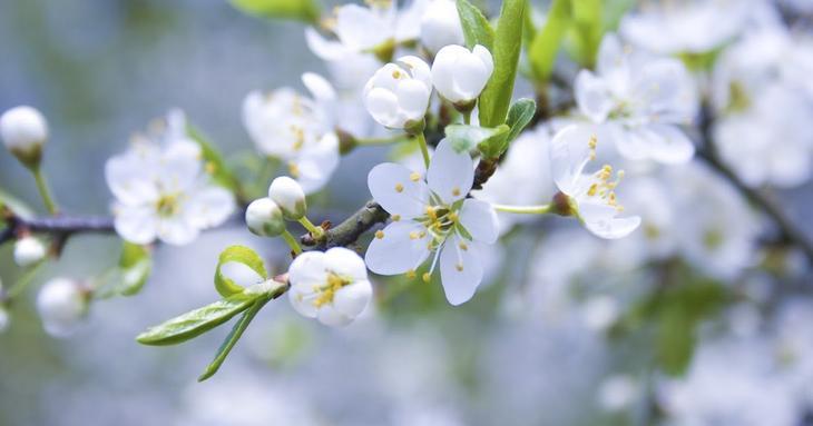 Обработка сада от вредителей особенности весенней обработки