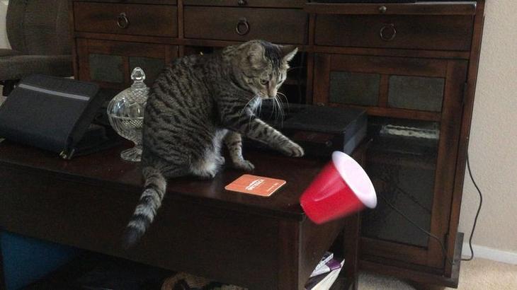 поймут только те у кого есть кот