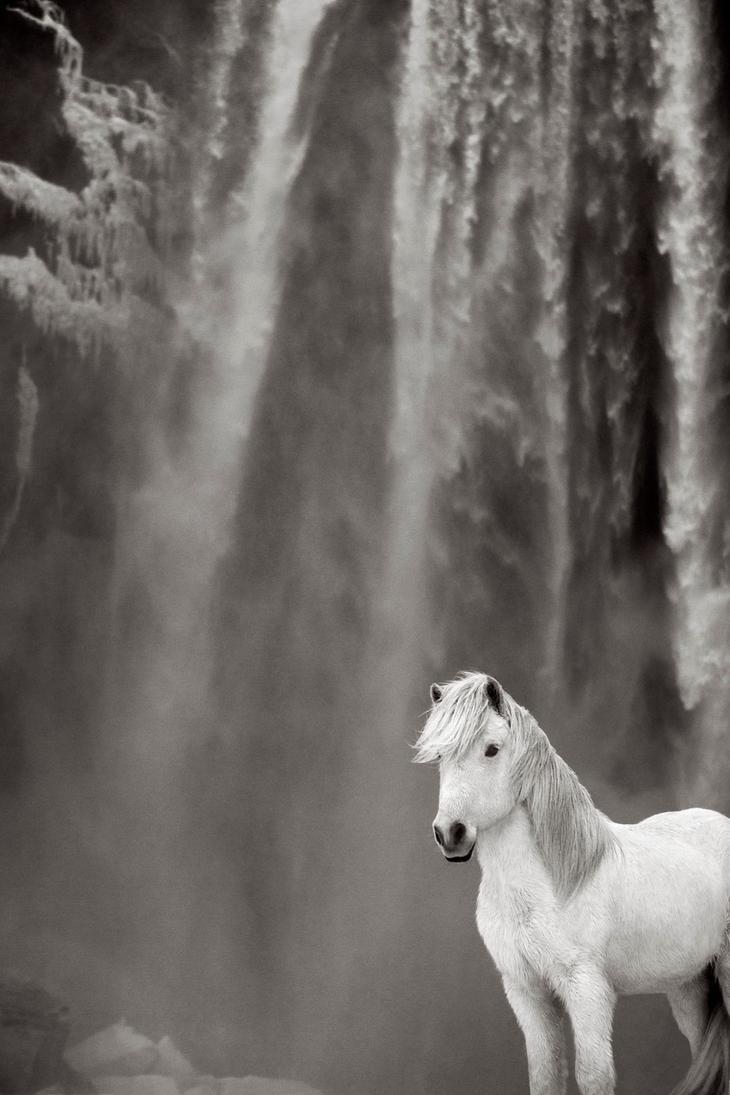 loshadi-Islandii-fotograf-Dryu-Doggett 13