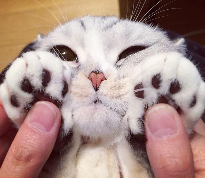 Хана — обворожительная кошка с огромными глазами, которая покорила Instagram
