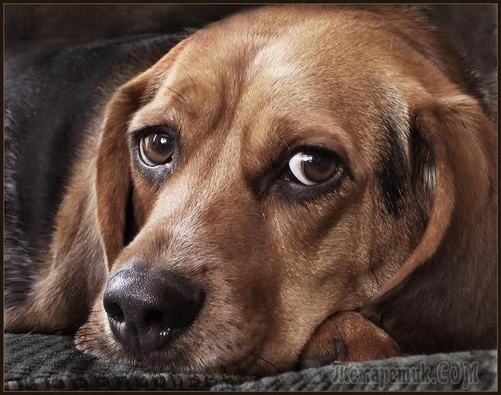 Собачья жизнь (Стих)