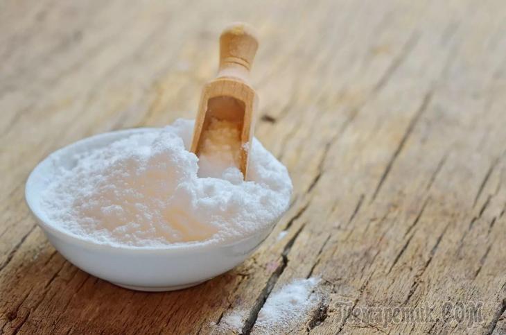 Янтарная кислота где содержится в продуктах