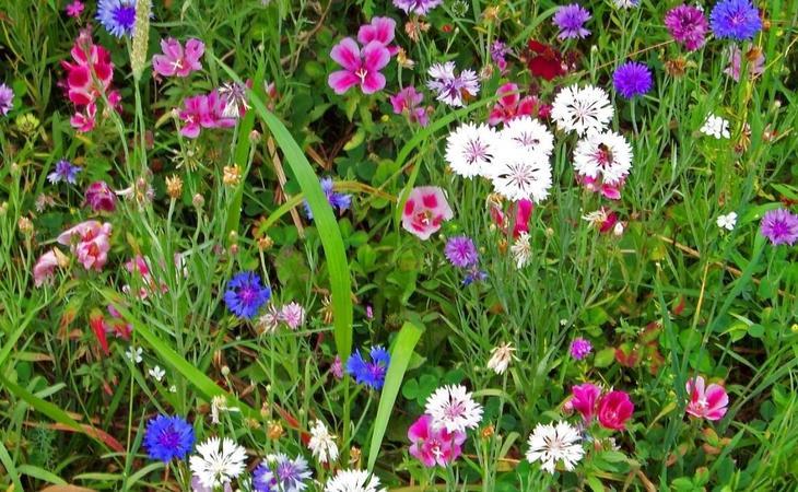 Растения-индикаторы – как определять состав и кислотность почвы на участке