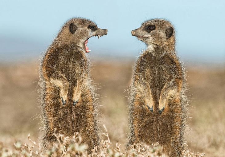 Смешные фотографии диких животных 29