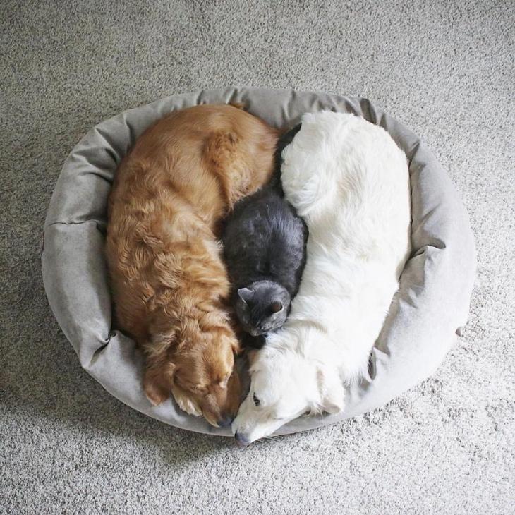 собаки и кот лучшие друзья, кот и две собаки дружат