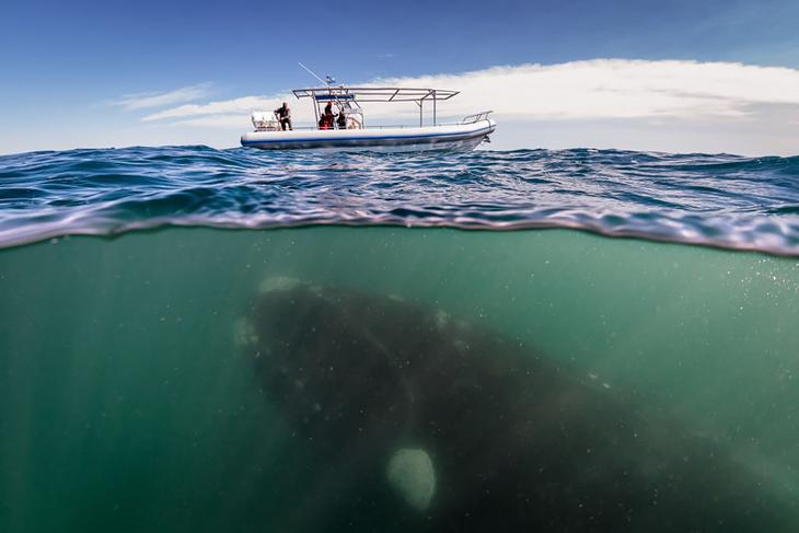 fotografii kitov 10