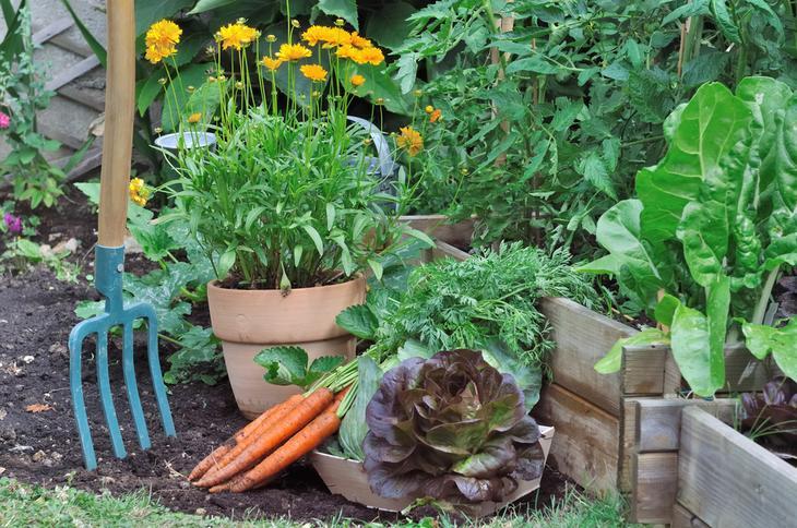 Тенелюбивые растения: что посадить в тени из овощей, кустарников, цветов?