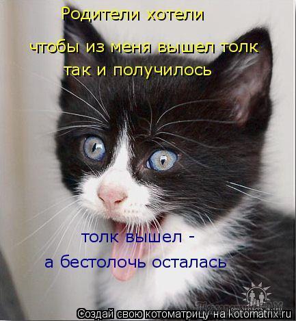 В основном - про котов