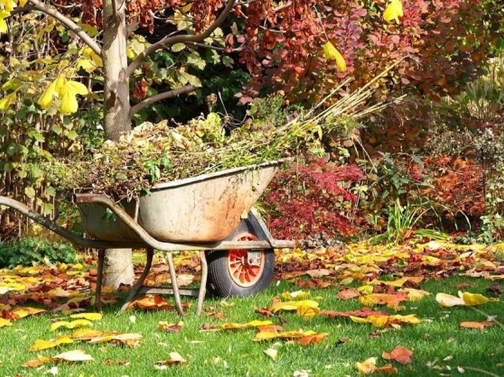Что сажать осенью на даче или в саду на огороде