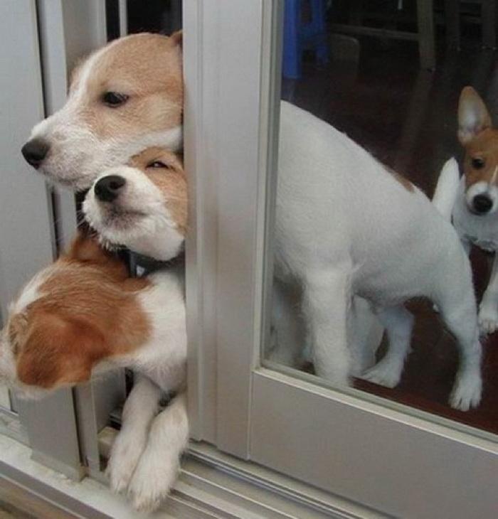 Для, картинки смешных собак с подписями
