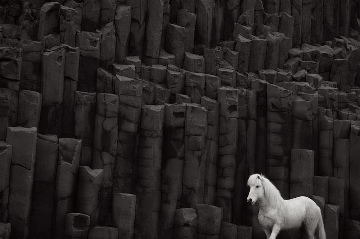 loshadi-Islandii-fotograf-Dryu-Doggett 17