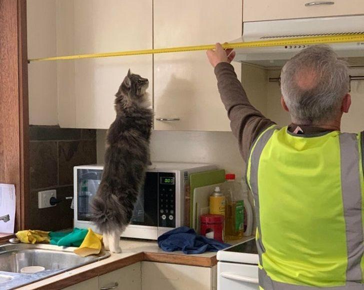 Кошки, которые трудятся не покладая лап