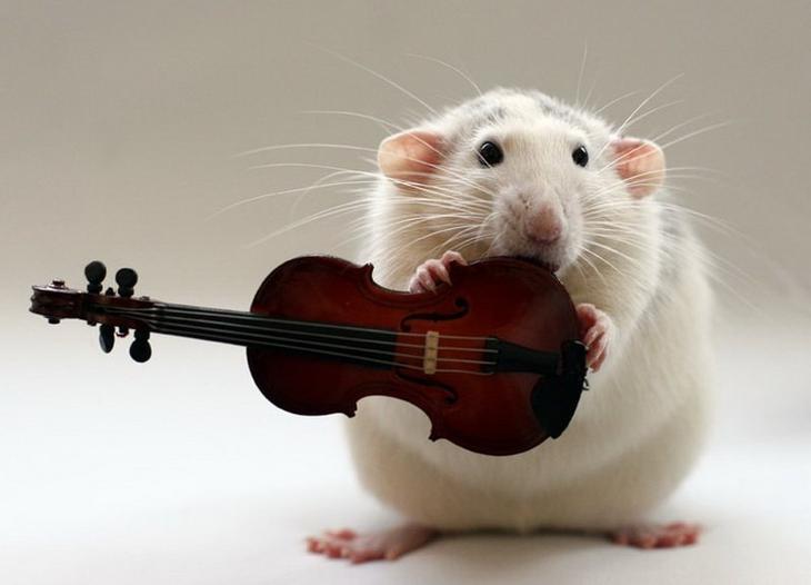 Крыса позирует со скрипкой. Эллен ван Дилен. Фото