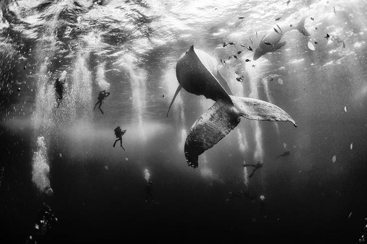 fotografii kitov 1