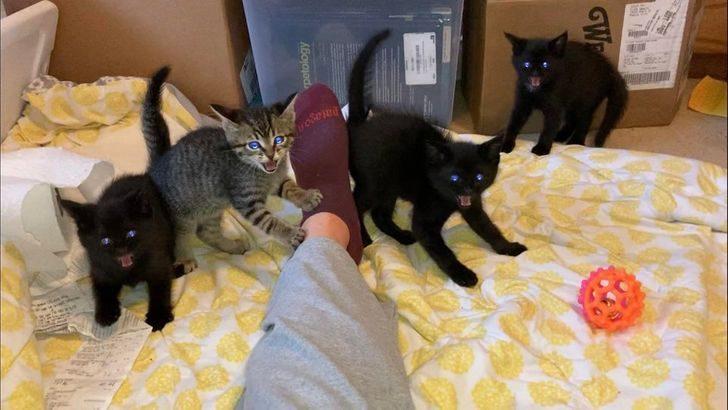 Люди, которые взяли домой котенка и по уши влюбились в это мелкое озорное чудо