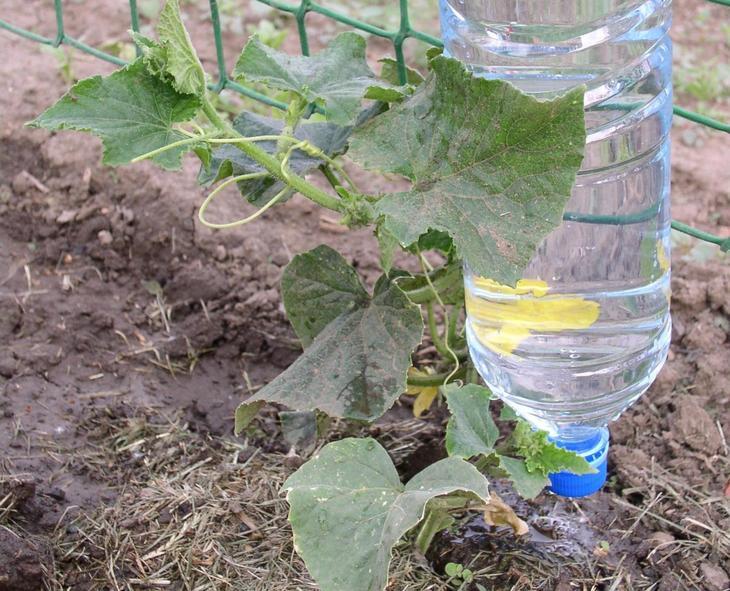 Полив из пластиковых бутылок - как организовать прикорневой полив, видео