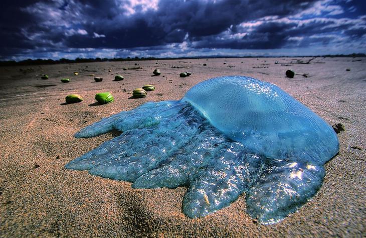 Выньте медузу из воды
