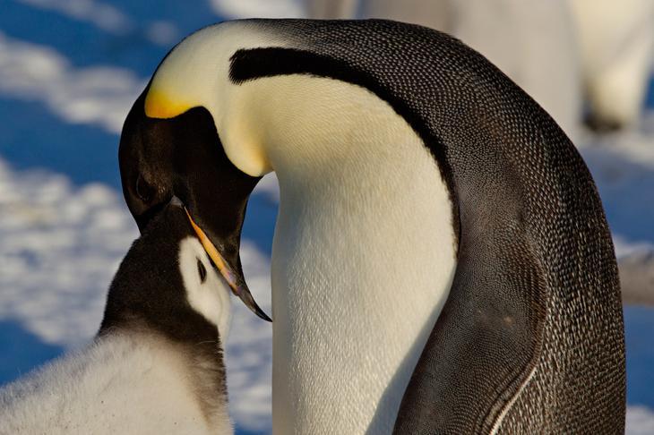Пингвины loverme