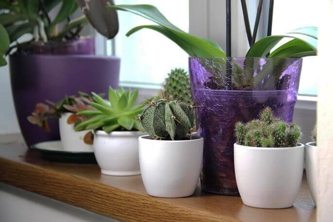 Озеленяем дом — 10+ лучших растений для жизни в гармонии