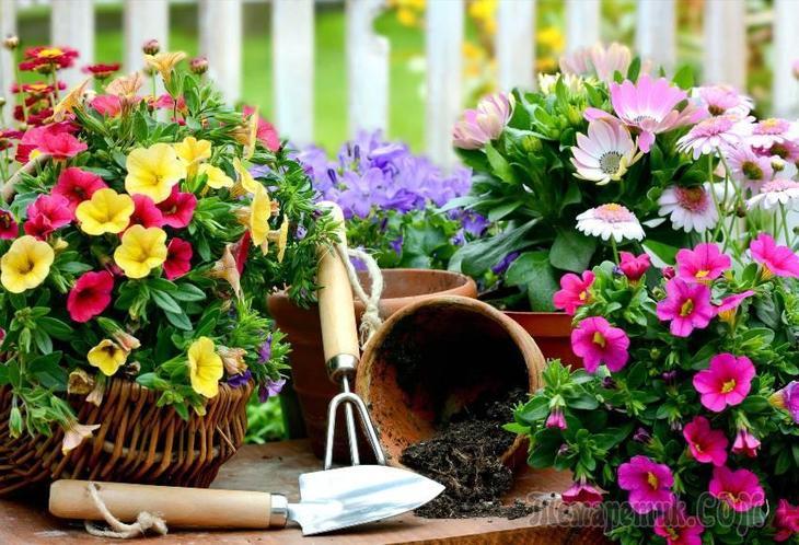 Многолетние цветы для клумбы каталог