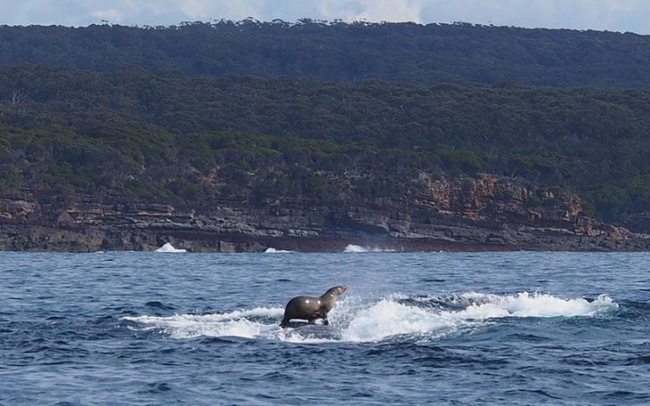fotografii kitov 11