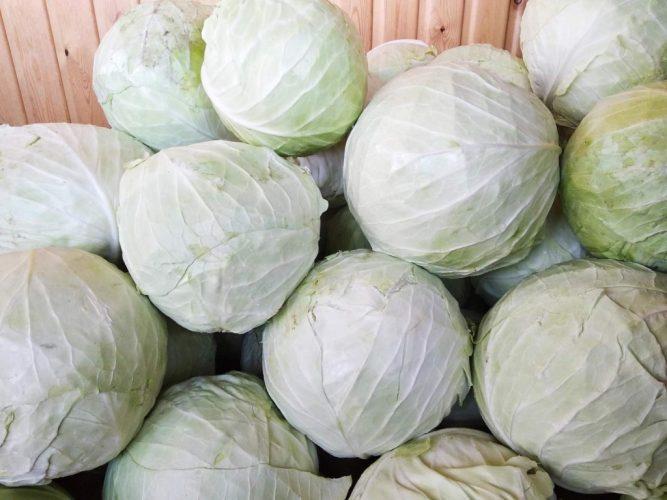 Когда срезать белокочанную капусту для хранения зимой
