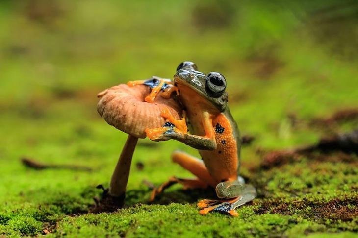 Подборка самых поразительных фотографий животных Забавные фото, животные, мимишность