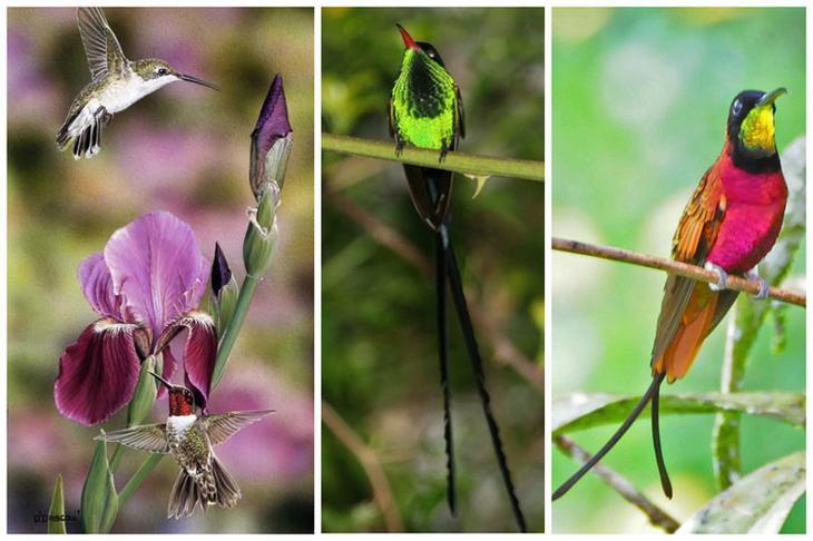 Официально зарегистрированная жизнь колибри 17 лет. Это рекорд, в основном они живут около 9 лет интересное, колибри, природа, птицы, факты, фауна