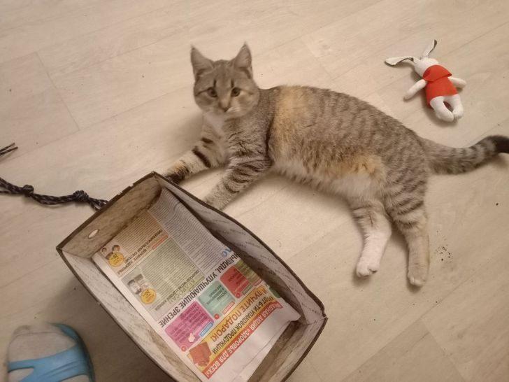 Не человек подбирает кошку, а она «усыновляет» его