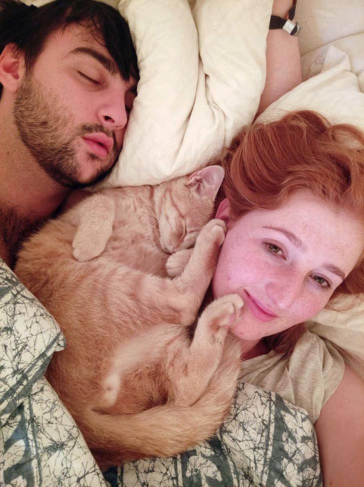 20 ответственных котов, которые не устают дрессировать своих нерадивых двуногих слуг