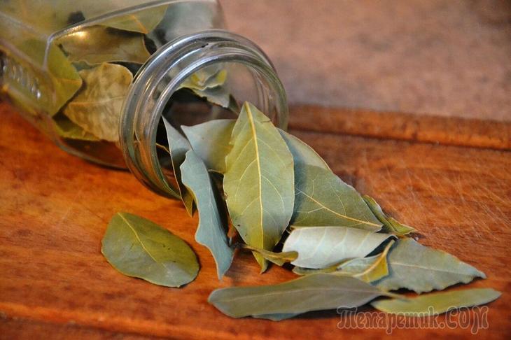 Травы от грибка ногтей на ногах – лечение и профилактика