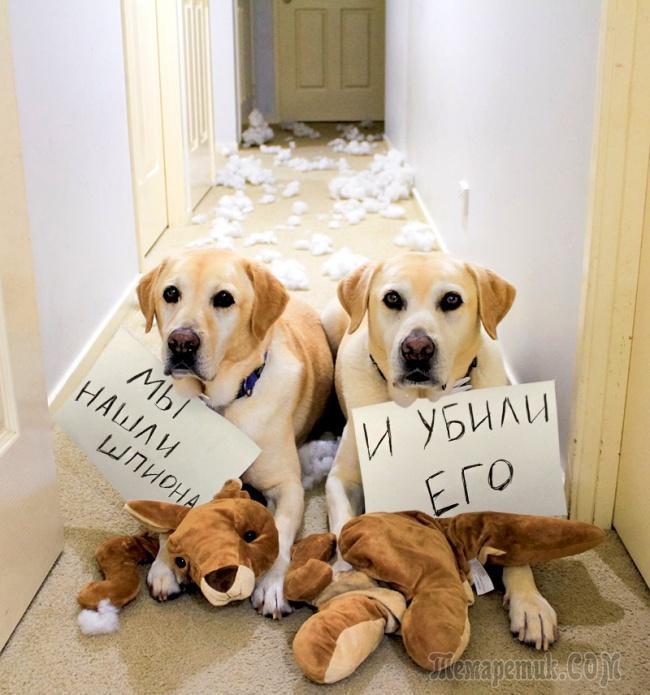 организациях картинка собачка просит прощения разделе обрезы фотографию