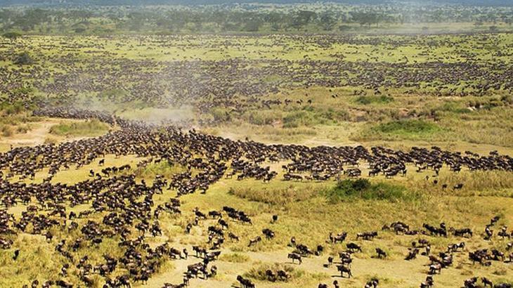 Серенгети, Танзания виды, города, история, факты, фото