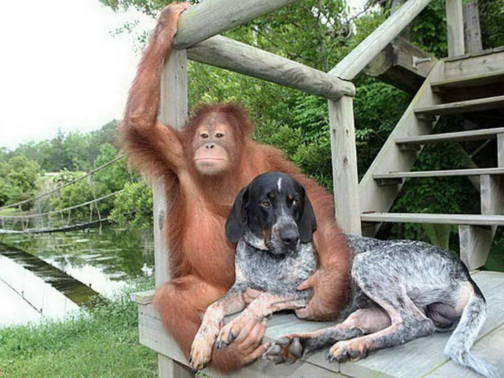 Когда просят сделать непринужденную позу на фото непринужденность, смешные животные, четкая поза