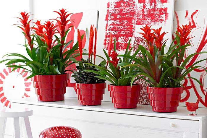 Все комнатные растения с красными цветами