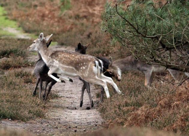 Способы и особенности ночной охоты на косулю
